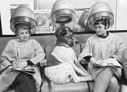 Dog at hairdresser (B&W)
