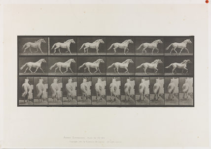 Plate 596, 'Animal Locomotion', 'Eagle, trotting, free'
