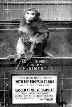 A Mascot Monkey at Clifton Zoo - 1916