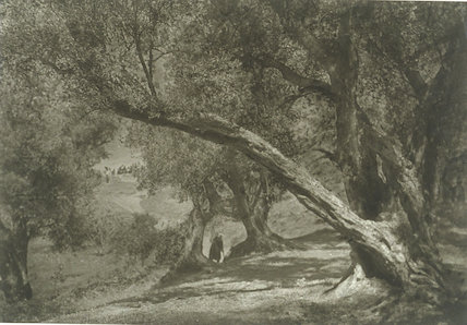 'The Bent Olive'