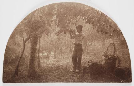 'The Vineyard', 1904