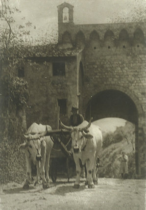 'Oxen at the Gate'
