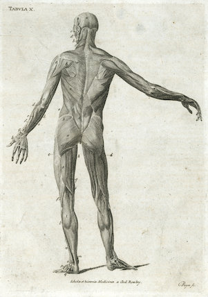 Tabula X, print showing the muscles of the human body, Europe,  c.1860.