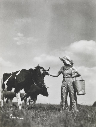 A milkmaid and cows