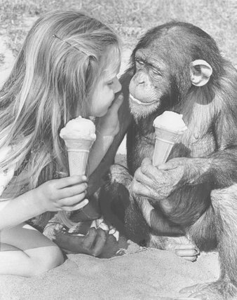Girl and chimp enjoy ice-cream