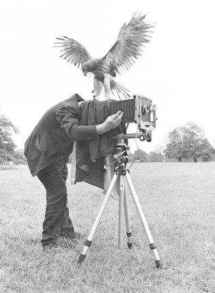 Mischievous Falcon