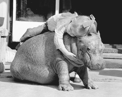 Even a hippo needs a hug