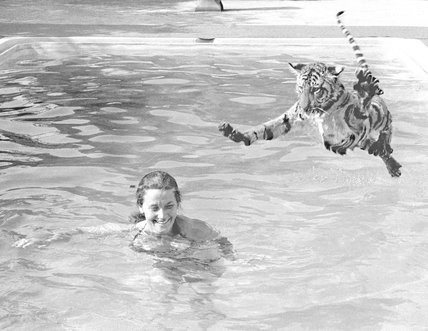 Tiger takes a swim