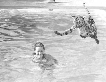 Tiger takes a swim