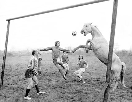 Football-playing horse