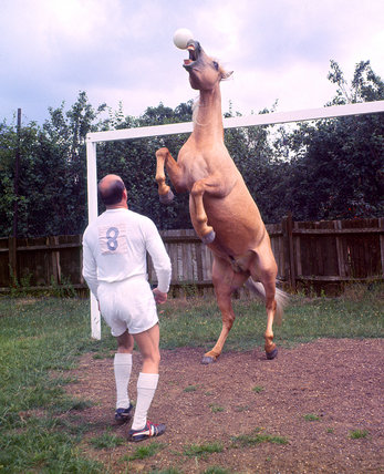 Football-playing horse