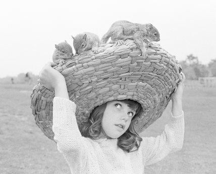 Squirrel Sombrero