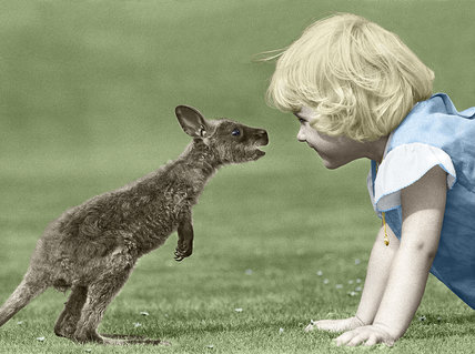 Making friends with a wallaby