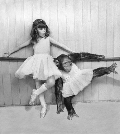 Ballet chimp