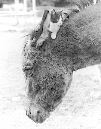 Donkey and cats