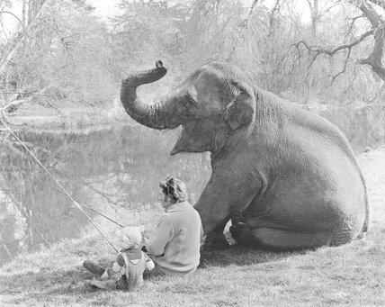 Elephant angler