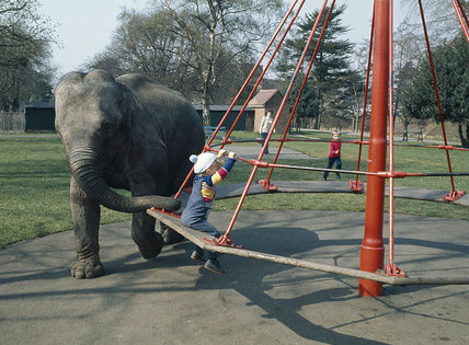 Elephant helps at playground