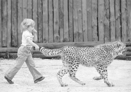 Cheetah by the tail