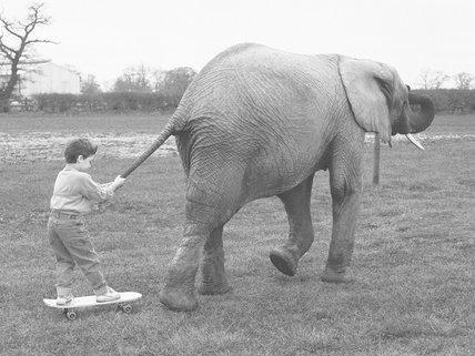 Elephant tow