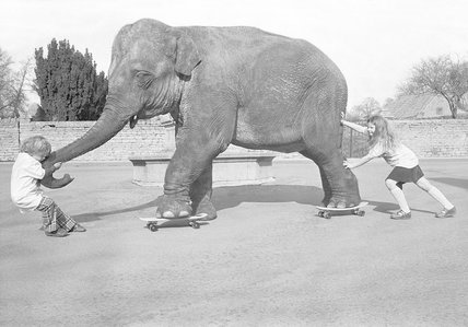 Skateboarding elephant