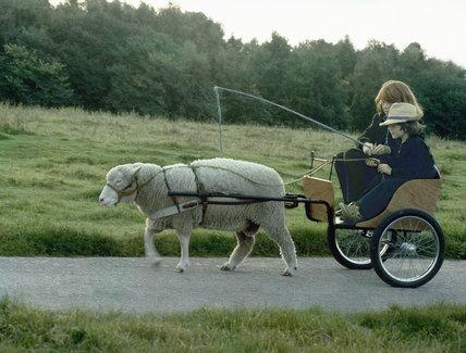 Ewe drive