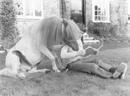 Reading horse