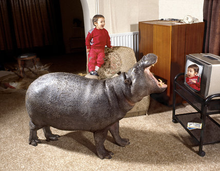 Hippo and boy