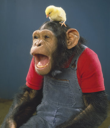 Chimp and chick