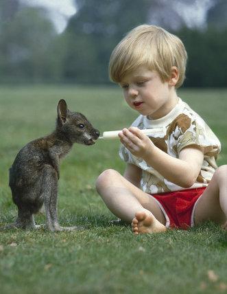 Feeding a baby wallaby