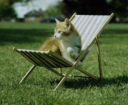 Kitten lounging