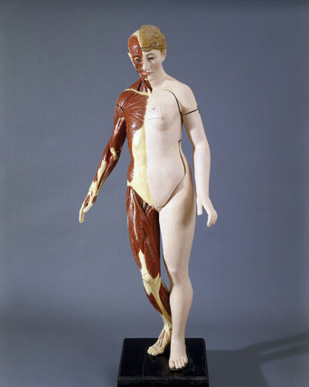 Life size anatomical female figure, standing, c 1900.