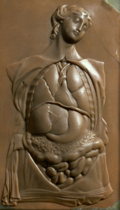 Female figure showing thoracic and abdominal contents, early 19th century.