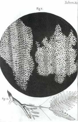 'Texture of Cork', 1665.