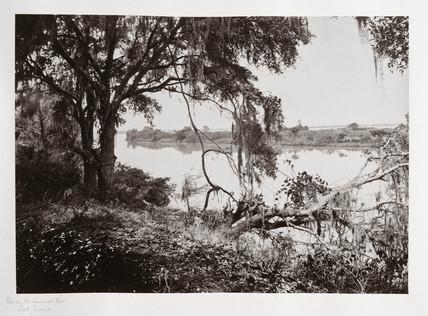 Savannah River, near Savannah, Georgia, USA, 1866.