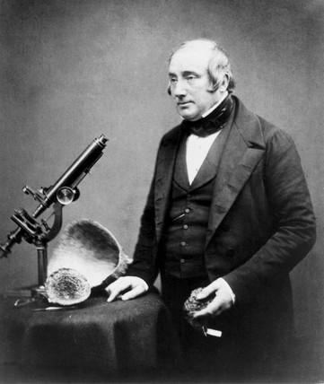 James Scott Bowerbank, British geologist, 1854-1866.