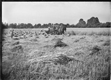 Cutting corn with horses c.1920s