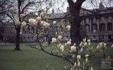 Queen Square, 1963