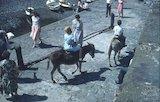 Donkey rides in Clovelly, North Devon, c.1959