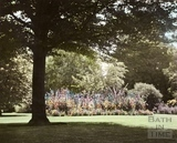 Summer, Botanical Garden, Royal Victoria Park 1961
