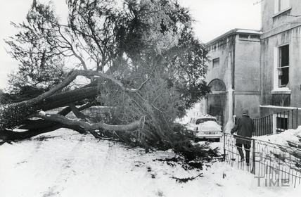 Fallen Tree in London Road, 18 Jan 1982