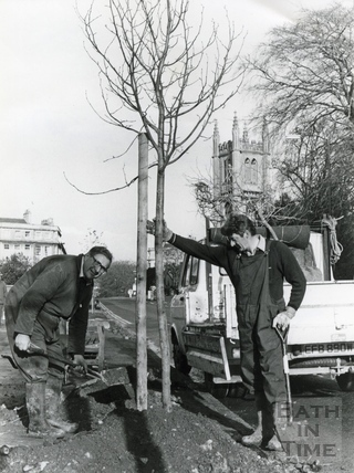 Tree planting in Pulteney Road, 29 Nov 1982