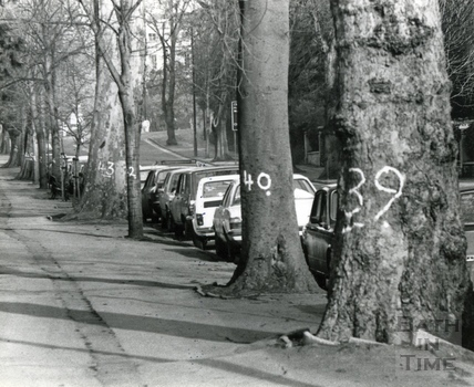 Numbered trees, Pulteney Road 8 Feb 1982