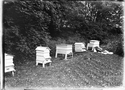 A selection of bee hives c.1930s