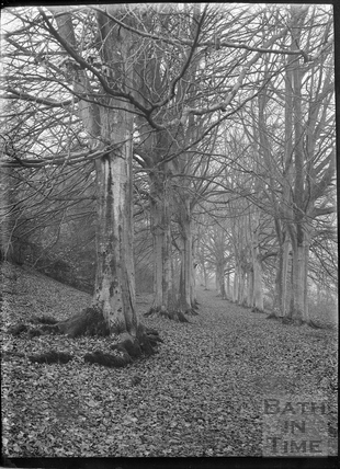 The Beech Walk, Claverton Manor, c.1930s