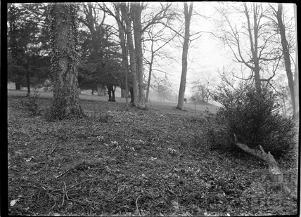 Woodland in Claverton Manor Grounds, c.1930s