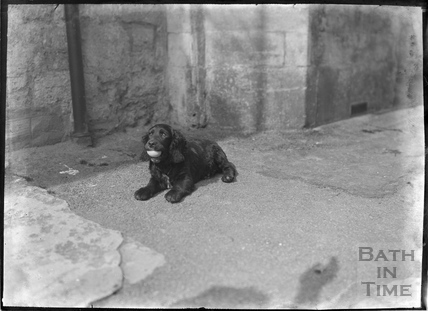 A dog with a ball, outside the Inn at Freshford, c.1927