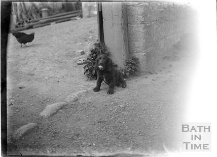 A dog with a ball, outside the Inn at Freshford, c.1927