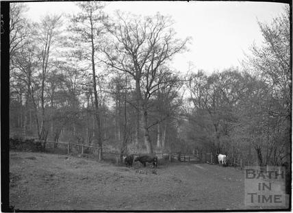 Hampton Down, Bathampton c.1904
