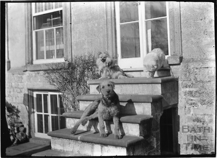 Dogs at the rear entrance of Batheaston House, 1922 / 1923