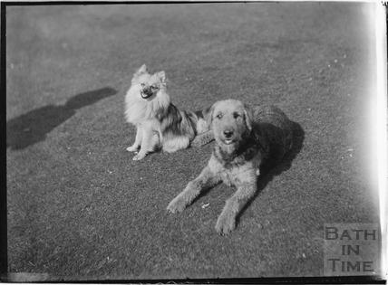 Dogs in the back garden of Batheaston House, 1922 / 1923